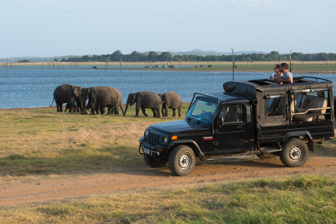 Elefant safari i Sri Lanka