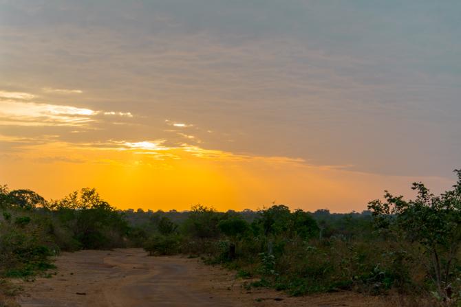 Solopgang på safari
