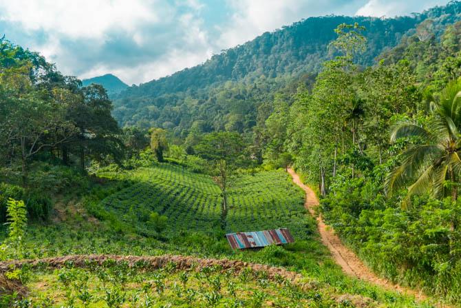 Themarker i Sri Lanka