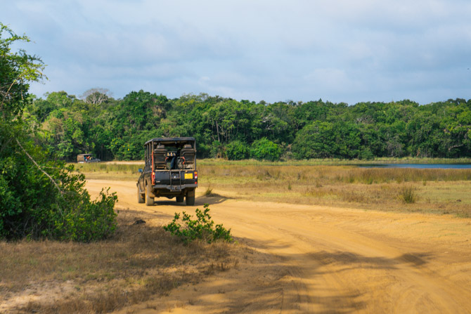 Jeep safari i Wilpattu National Park